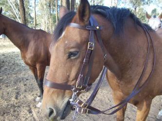 lighthorse WWI Bridle reproduction